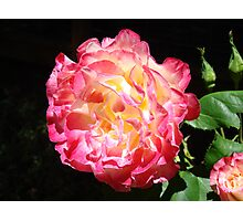 Rose Flower Art Print Big Pink Roses Floral Photographic Print