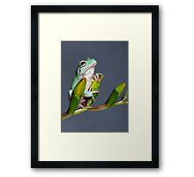 Cute young tree frog Framed Print