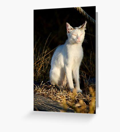 beautiful domestic cat Greeting Card