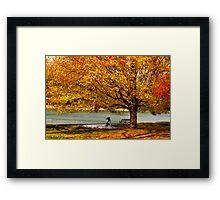 Golden maple warm me up  Framed Print