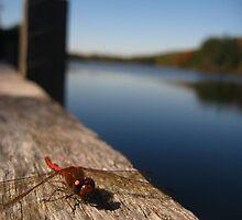 A Lucky Find in Pennsylvania by Jennifer Jorgensen