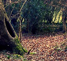 Enchanted Forest, Porthkerry Park by HollyRuthven