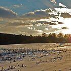 sun and snow by Veronica Timpanelli