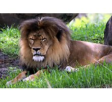 King of Beasts Photographic Print