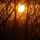 sunrise through the trees by Veronica Timpanelli