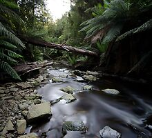 Stream, Howell Gorge by Jarryd Field