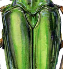 Scarab Beetle Sticker