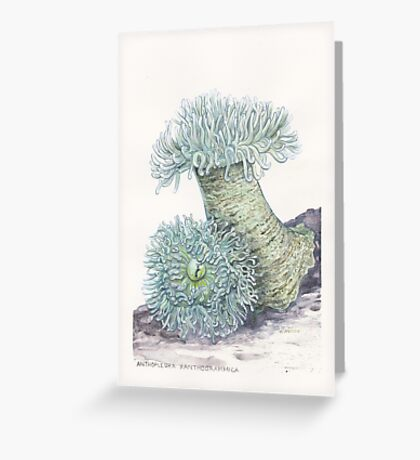 Giant Green Sea Anemones Greeting Card