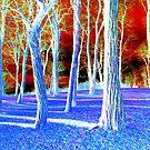 Late Autumn by David Schroeder