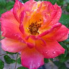 Rose swirls by MarianBendeth