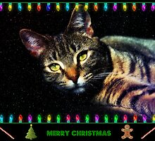 Merry Christmas by jodi payne