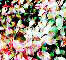 COLOURFUL LEAVES by REKHA Iyern [Fe] Records Canada