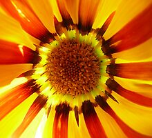 Sunshine Flower by Emma-Louise Bussey