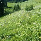 Wildflowers on Excelsior Pass in Whatcom County by rferrisx