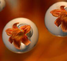 Tiger Lily Water Drop by bradydhebert