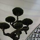 Pom Pom Tree inside Bangkok Airport by Ian Ker