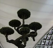 Pom Pom Tree inside Bangkok Airport by Ian Ker
