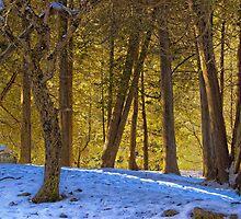 Snowy Glade by sundawg7