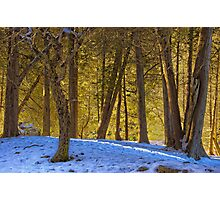 Snowy Glade Photographic Print