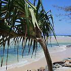 kingscliff beach ... by gail woodbury