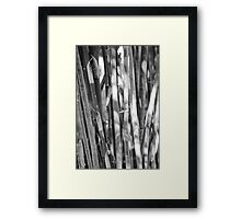 Bamboo Trees Framed Print