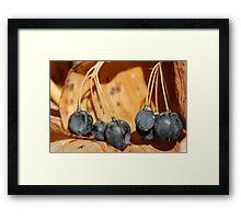 Black Berries Framed Print