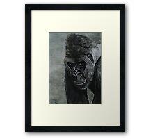 Tinted Charcoal Gorilla Framed Print