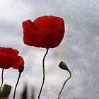 Red Poppies by Lynda Heins
