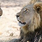 Surprised lion by Will Hore-Lacy