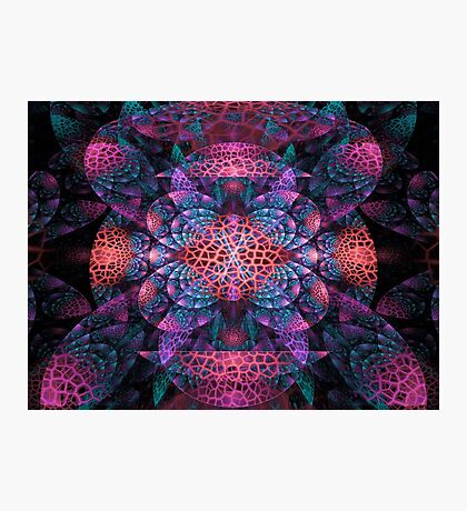 Corals Of The Deep Photographic Print