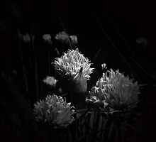 Chive flower by Josie Jackson