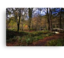 Forest Footpath Canvas Print