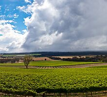 China Bend Winery, Victoria, Australia by Joel Bramley