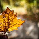Welcoming Fall by Christopher Gaines