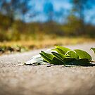Fallen Leaves by Christopher Gaines