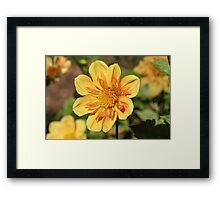 Yellow Flower Flaming Framed Print
