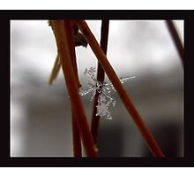 2nd Chance Snowflake~!!!!! Photographic Print