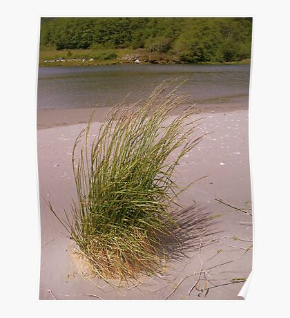 The beauty of grass Poster