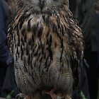 European Eagle Owl by Nick Barker
