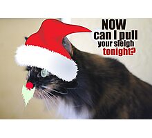 Now Can I Pull Your Sleigh Tonight? Photographic Print