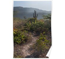 Cactus Trail Poster