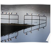 seabirds in a row Poster