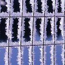 Imprisoned by winter by lenslife