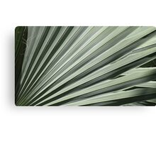 Silver Green Canvas Print