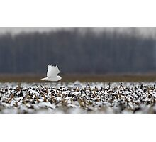 Ghost - Snowy Owl Photographic Print