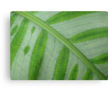 Painted Leaf Canvas Print