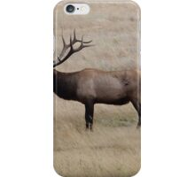 Bull Elk in Rocky Mountain National Park iPhone Case/Skin