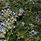 Nightlife of a Hummingbird Moth by theweirdo666