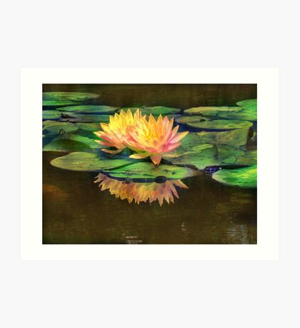 The Beauty of Water Lilies Art Print