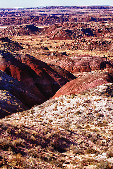The Painted Desert  8023 by Bo Insogna